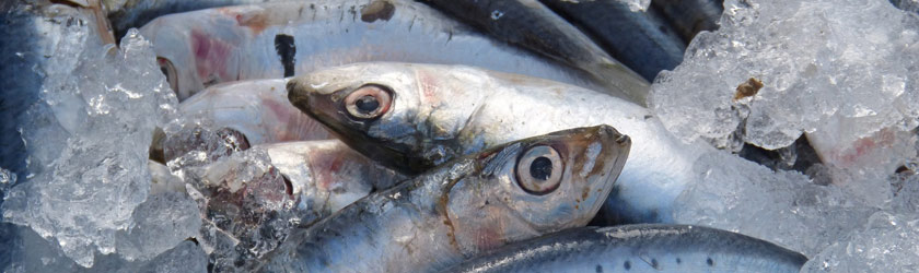 Mercan Fischmarkt Oberrad